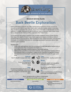 Bark Beetle Exploration Instructor Guide