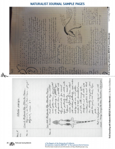 Naturalist Journal Sample Pages