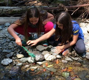 Kids participating in BEETLES activity at stream