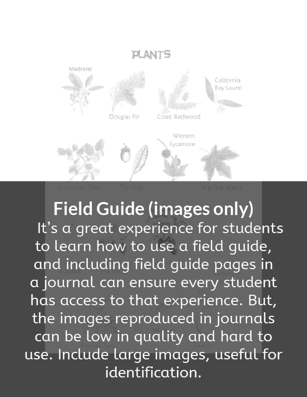 6. field guide-caption