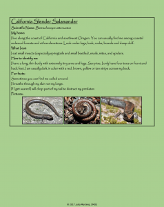 Camp Jones Gulch Amphibian Key